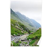 Sheep running on high mountain area of Transfagarasan, Romania Poster