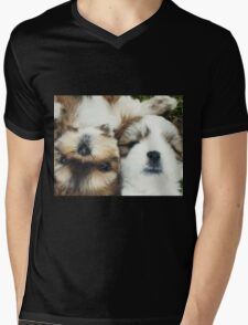 Shitzu Dog Mens V-Neck T-Shirt