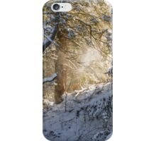 Sunshine Through Snowy Trees iPhone Case/Skin