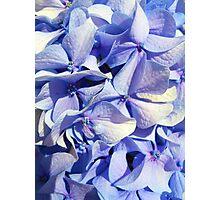 Blue Flowers [ iphone / case / samsung / ipad / mug ] Photographic Print