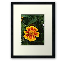 Yellow and Red Flower Framed Print