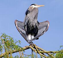 Yoga Heron by LinneaJean