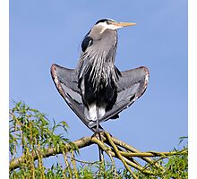 Yoga Heron Photographic Print