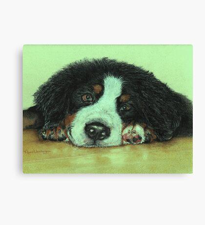 Big Puppy Paws Canvas Print