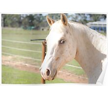 Jedy the horse Poster