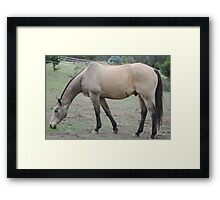 SandMan-The Horse  Framed Print
