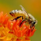 Busy Bee by Lin Taylor