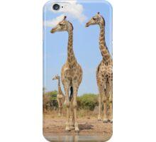 Giraffe - African Wildlife Background - Stare of Symmetry iPhone Case/Skin