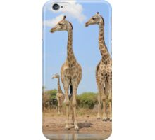 Giraffe - African Wildlife Background - Stare of Symmetry iPhone Case/Skin