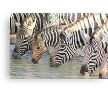 Zebra - African Wildlife Background - Pleasure of Water Canvas Print