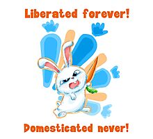 Liberated Forever, Domesticated Never! (The Secret Life Of Pets) Photographic Print
