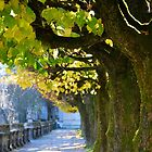 Autumn Sun, Salzburg by Tiffany Dryburgh