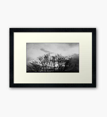 Trees Going Nowhere Framed Print