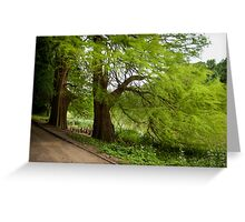Two monumental swamp cypresses Greeting Card