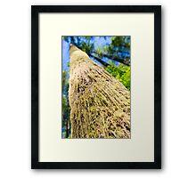 Tree Moss - Rattlesnake Ledge, Washington Framed Print