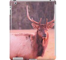Close Up Elk iPad Case/Skin