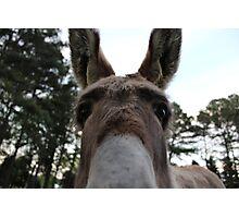 Donkey Saying Hi Photographic Print