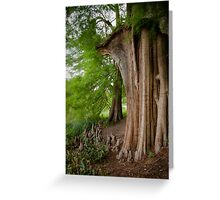 Under the swamp cypresses Greeting Card