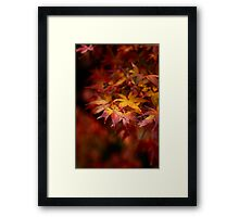 Autumn Colours in Winter Framed Print