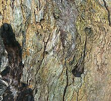 Textured trunk by ndarby1