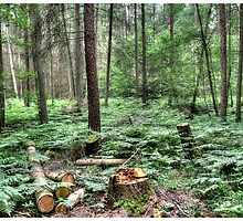Forest glade by paulrhelsby