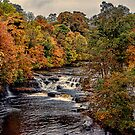 Aysgarth Falls Yorks Dales by Trevor Kersley