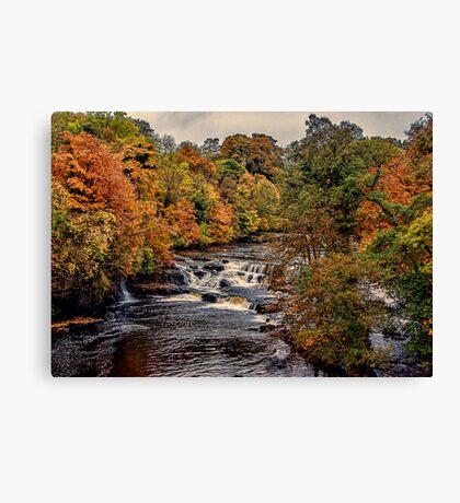 Aysgarth Falls Yorks Dales Canvas Print