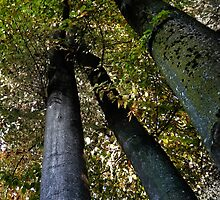 forest pillars by NafetsNuarb
