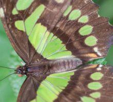 butterfly on the flower Sticker