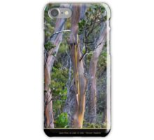 Gum Trees at Lake St Clair iPhone Case/Skin