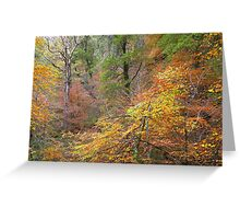 Cawdor Woods in Autumn Greeting Card
