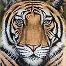 Tiger's Last Roar by Nicole Zeug