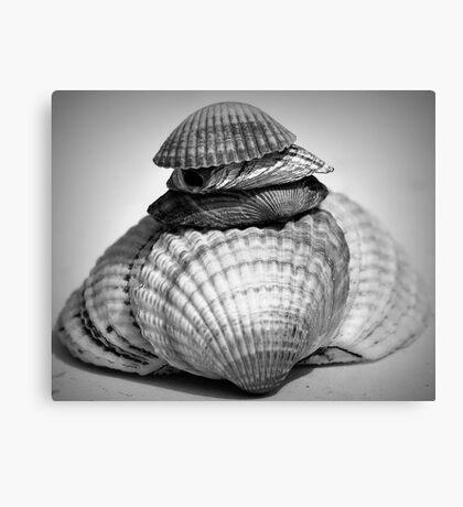 Shells monochrome Canvas Print