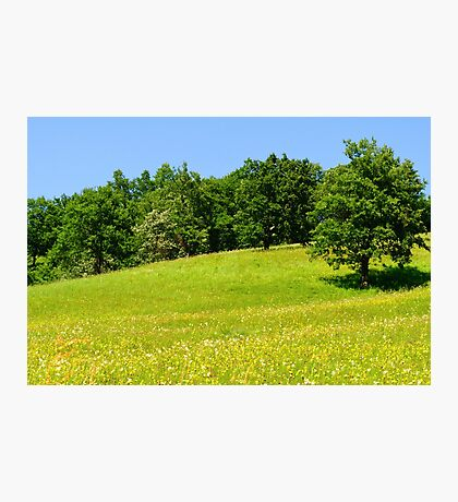 Beautiful countryside landscape with flowers Photographic Print