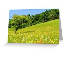 Beautiful countryside landscape in Transylvania Greeting Card
