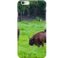 European bisons iPhone Case/Skin