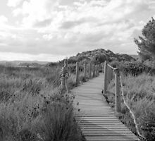 Wooden path crossing grass field in summer by Stanciuc