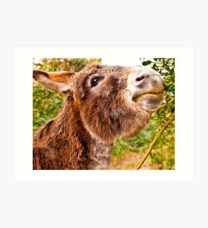 A New Forest donkey Art Print
