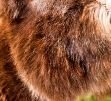 A New Forest donkey Sticker