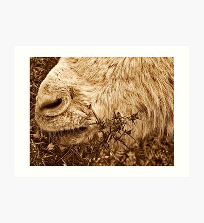 A nose for food Art Print