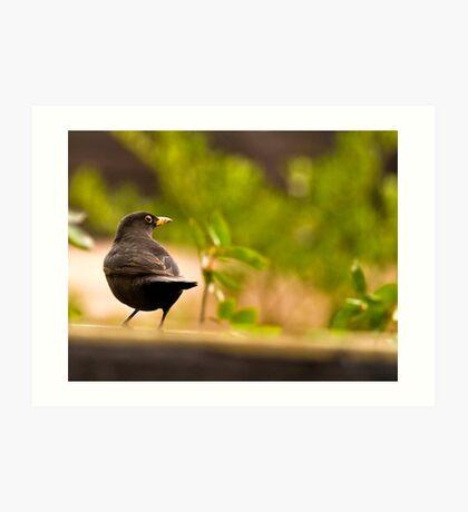 Bird on watch Art Print