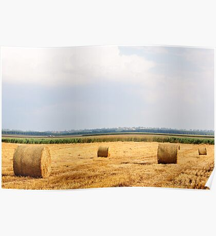 Golden Hay Bales on field after harvesting Poster