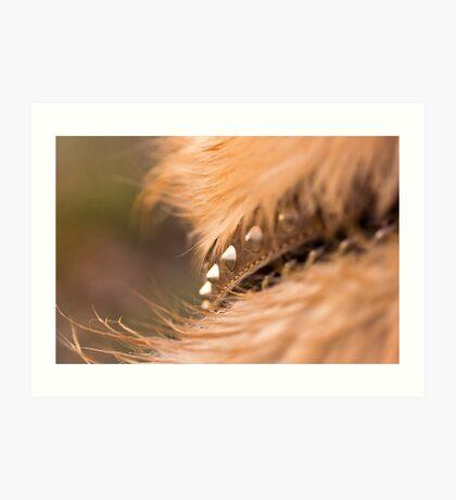 Dog collar Art Print