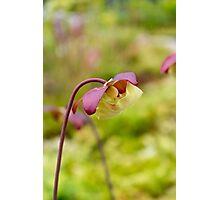 Beautiful Flower Photographic Print