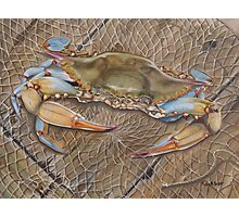 Crab In A Trap Photographic Print