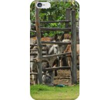 Mules in a Holding Pen iPhone Case/Skin