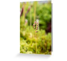 Stem Flower Greeting Card
