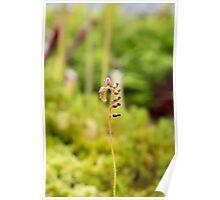 Stem Flower Poster