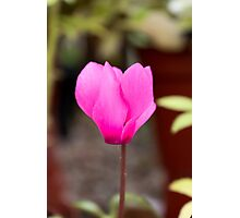 Pink Flower Photographic Print