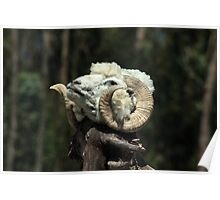 Sheep Head on a Stick Poster